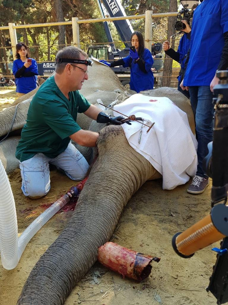 Veterinarians from the University of Pretoria have carried out intricate surgery to remove an elephant's infected tusk at a zoo in former Soviet republic Georgia.