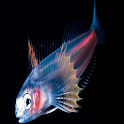 Deep Sea Wallpapers icon