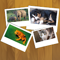Pix - Animals game for kids icon