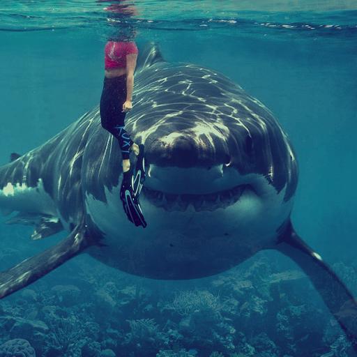 Great White Shark Videos (app)