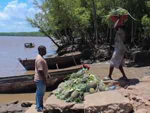 Livelihoods in Rufiji delta