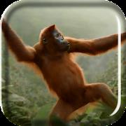 Wild Dance Crazy Monkey LWP