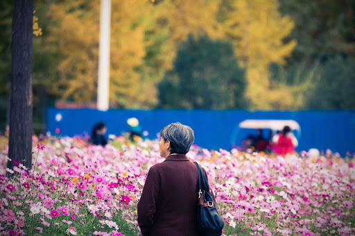 Beijing-Chaoyang-Park - An elderly woman stands in quiet appreciation of the beauty of the fall flowers in Chaoyang Park in Beijing, China