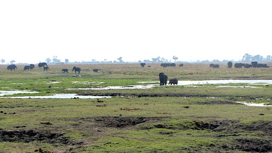Photo: Chobe National Park, Riverfront - herds of elephants
