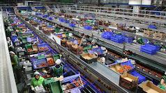 Almacén  agrícola almeriense a pleno rendimiento.