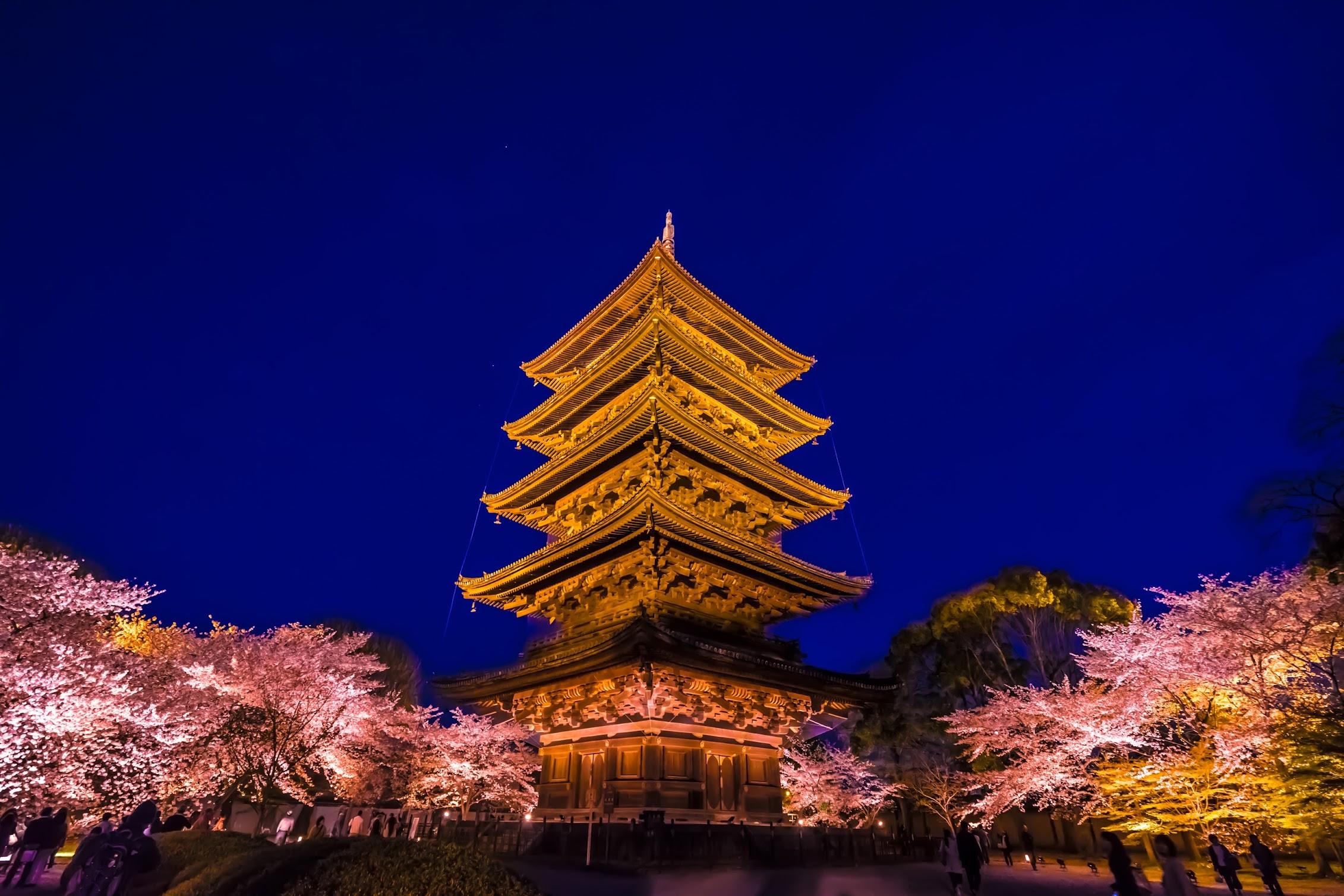 京都 東寺 桜 ライトアップ2