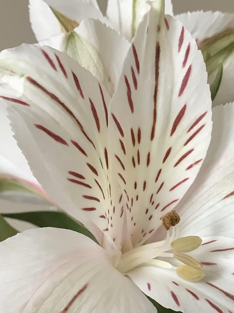 Tra i petali di Pierafff