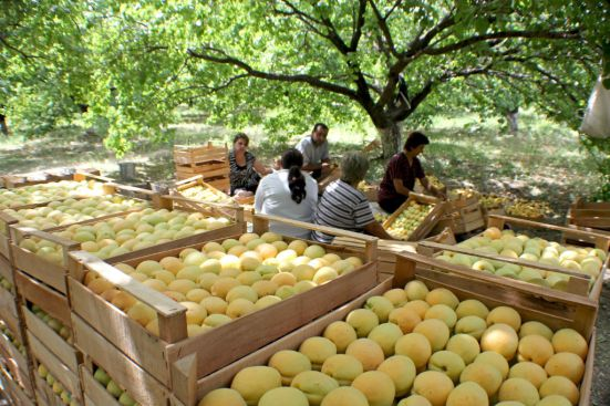 apricots-the-armenite-tatevik-vardanyan-10