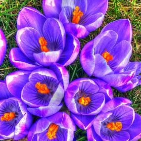by Keld Helbig Hansen - Flowers Flower Gardens