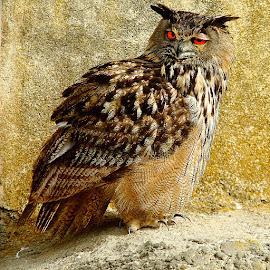 by Gérard CHATENET - Animals Birds