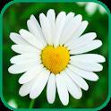 Лекарственные травы и растения icon