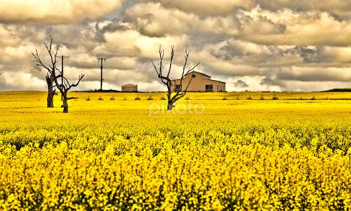 fields of gold prairies meadows fields landscapes pixoto
