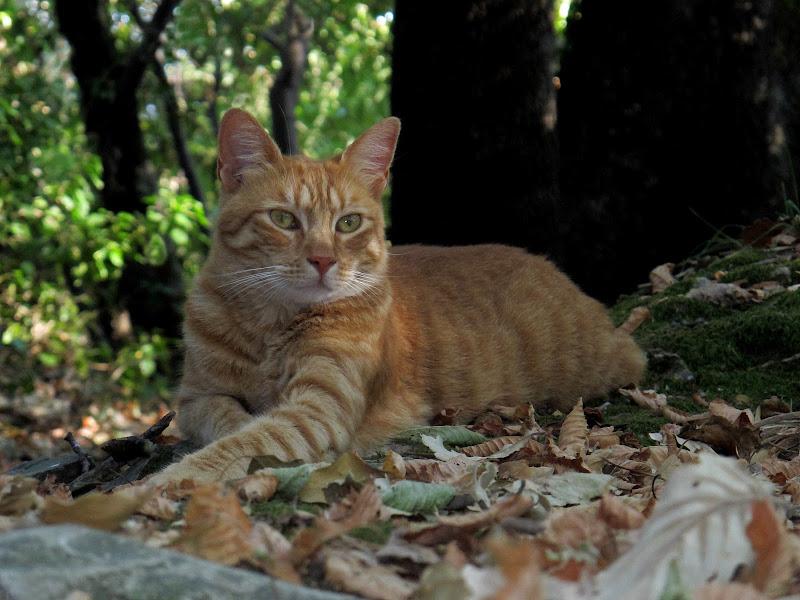 .... La principessa del bosco ... di Ale27