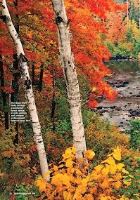 Country- screenshot thumbnail