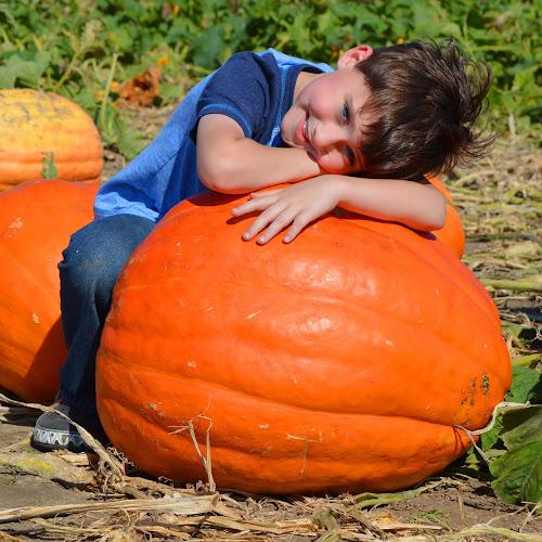 Pumpkin Patch by Shannon Maltbie-Davis - Public Holidays Halloween (  )