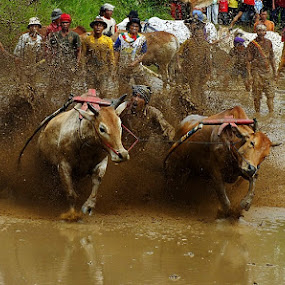 HURRY...!!! by Romi Febrianto - Sports & Fitness Rodeo/Bull Riding