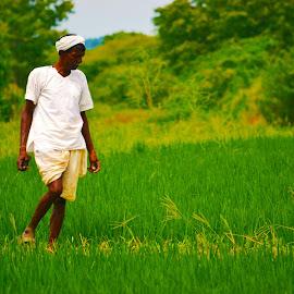 Indian Farmer by Amaresh Jana - Nature Up Close Gardens & Produce ( farmer, green )
