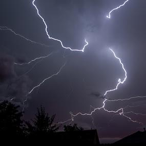 Lightning 4 by Colin Toone - Landscapes Weather ( clouds, strike, lightning, sky, purple, tree, blue, white, electricity, storm, black )