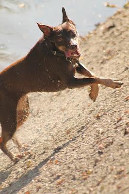 Canis Lupus Familiaris di Laikino