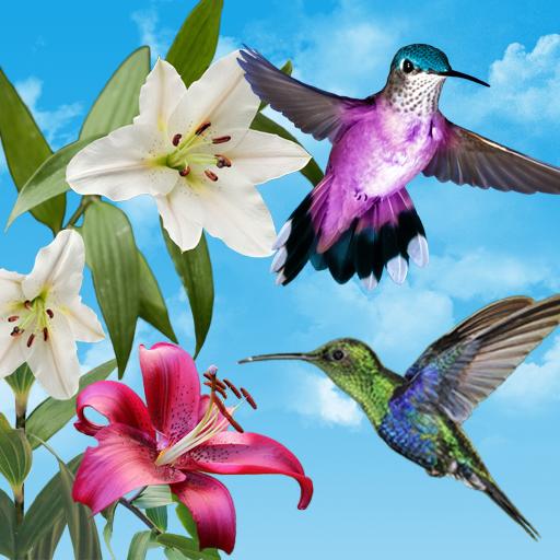 Birds Live Wallpaper Free