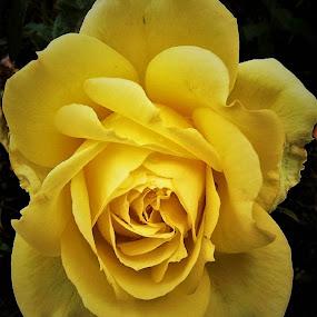 by Donna Van Horn - Flowers Single Flower (  )