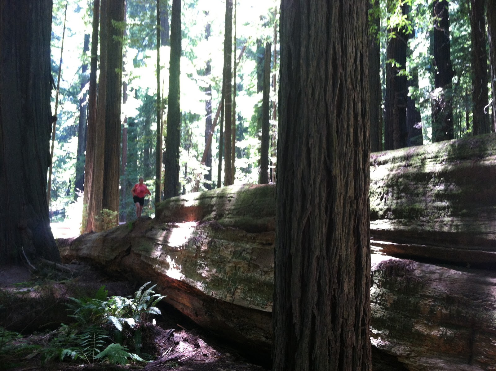redwood national forest bike trip