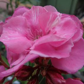 Karabi  by Atreyee Sengupta - Flowers Single Flower