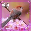 Cute Birds Live Wallpaper icon