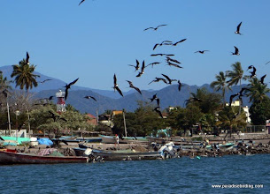 Photo: Frigatebirds over the San Blas boat docks