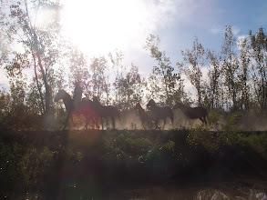 Photo: Tropilla a la vera del río
