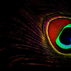 Colours of life by Ritwick Srivastava - Artistic Objects Other Objects ( pattern, ritwick, vivid colour, feather, peacock,  )