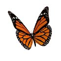 Animated 3D Butterfly icon