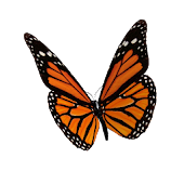 Animated 3D Butterfly