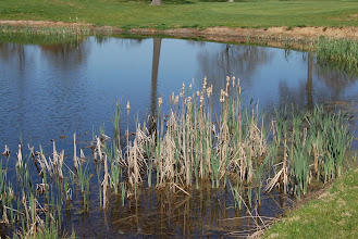 Photo: 22 ... The Meadow's Golf Course, Lincoln Park, NJ