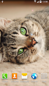Cat Live Wallpaper 3