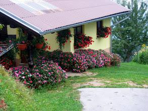 Photo: pa naj reče kdo, da na Pohorju ni rož