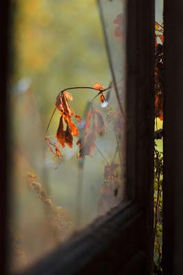 Da dietro una finestra... di Giulia Paola
