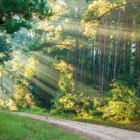 by Jan Davis - Landscapes Forests