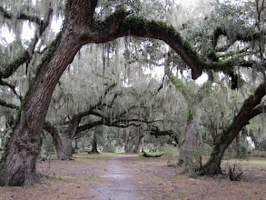 Photo: I love the Spanish moss in the South