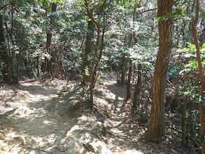 ちごの森方面へ降りる
