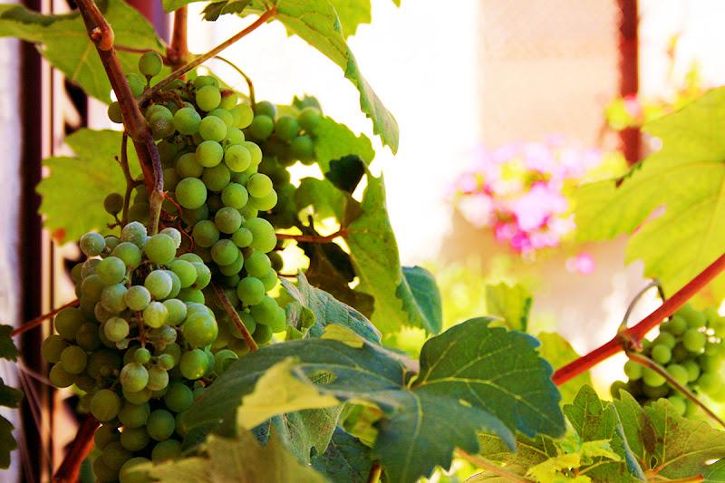 Rinascita del vino di Fabrizio Di Giovanni