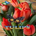 Tulips Ideas icon