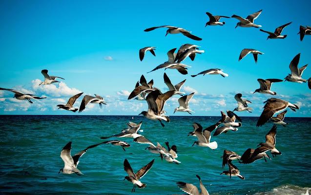 Viaggiare e Volare di marikarossiphotography