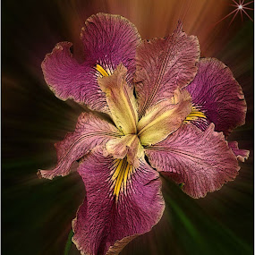 Iris by Marissa Enslin - Digital Art Things