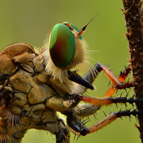 Take a Rest by Rizki Mayendra - Animals Insects & Spiders ( macro,  )