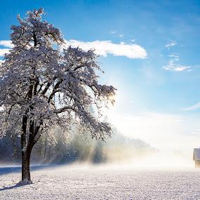 Cold morning by Boris Podlipnik - Landscapes Sunsets & Sunrises ( snow, morning,  )