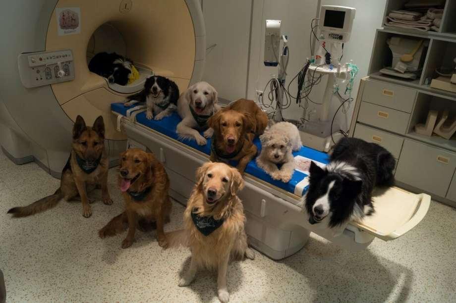 Dogs, Dog's intelligence, Budapest, Hungary, Dog Lovers