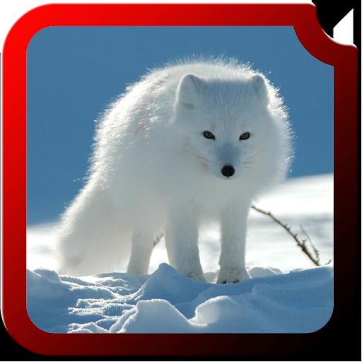 雪のHDの壁紙 個人化 App LOGO-硬是要APP