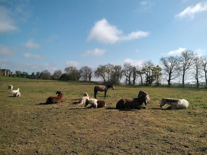 草原に寝そべる馬