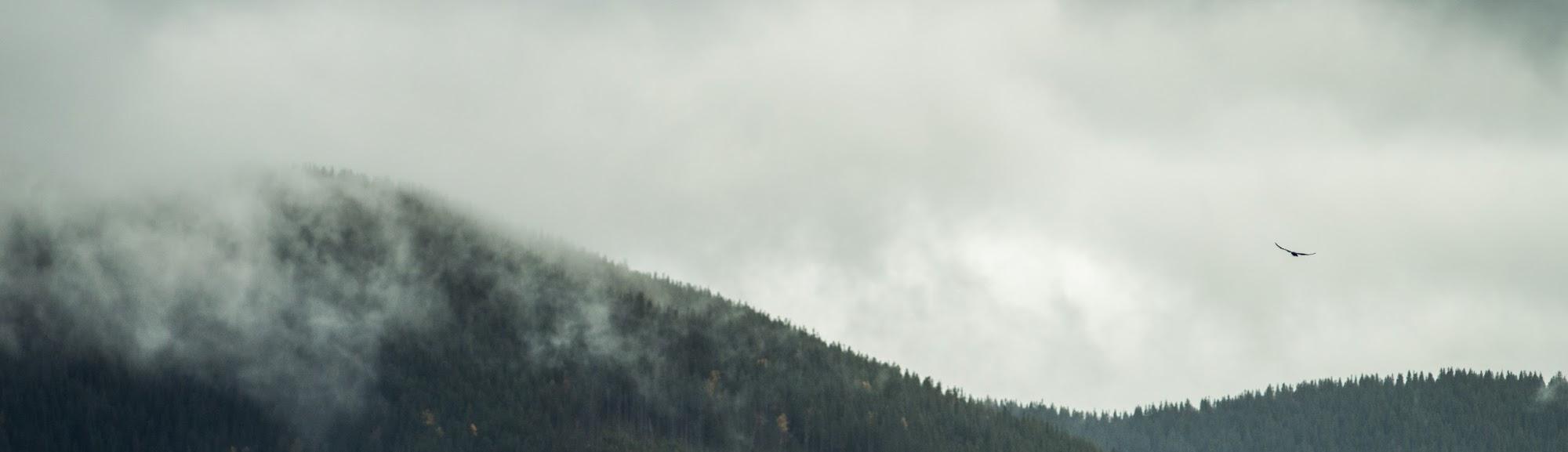 Орел, Хребет, Ліс